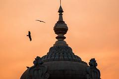 Je t'appelle dans le silence. (- Ali Rankouhi) Tags: moment dusk india bangalore karnataka vidhana soudha black kites sky orange هند بنگلور آسمان پرواز