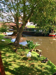 Red Lion Pub (Rory Llowarch) Tags: hopwas tamworth hopwastamworth pubs pub staffordshire canal canals garden canalboats hopwasstaffordshire england english coventrycanal englishheritage englishhistory englishpub englishpubs food boozer booze wine beer alcohol gin whiskey whisky brandy rum gardens b783af pubfood summer summertime sunshine sunny water clouds cloud bridge bridges travel village villagepub villagepubs villages countrypub countrypubs scenic