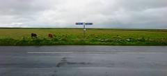 Wild Atlantic Road (Egon Abresparr) Tags: signpost road