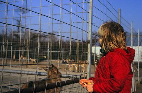 "HdJ Kro: Tagesfahrt zum Tierpark Gettorf (03) • <a style=""font-size:0.8em;"" href=""http://www.flickr.com/photos/69570948@N04/16946755860/"" target=""_blank"">View on Flickr</a>"