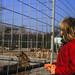 HdJ Kro: Tagesfahrt zum Tierpark Gettorf (03)