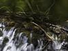 Hobble Creek Vignette (JMGiolas) Tags: creek utah wasatch pentax hobble 645z