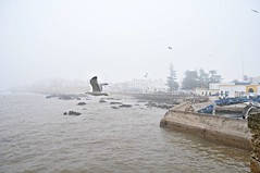 fly..away (L C L) Tags: africa city sea mar cloudy seagull ciudad morocco nublado marruecos gaviota essaouira atlntico bruma ocano 2015 lcl nikond90 loretocantero