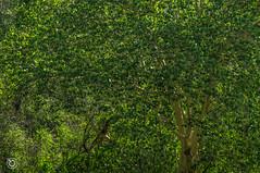 DSC03237 (Braulio Gmez) Tags: barrancadehuentitn biodiversidad caminoamascuala canyon canyonhuentitan faunayflora floresyplantas guadalajara guardianesdelabarranca huentitn ixtlahuacandelro jalisco mountainrange mxico naturaleza paisaje senderismo sierra barrancadehuentitn barranca huentitn ixtlahuacandelro mxico