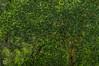 DSC03237 (Braulio Gómez) Tags: barrancadehuentitã¡n biodiversidad caminoamascuala canyon canyonhuentitan faunayflora floresyplantas guadalajara guardianesdelabarranca huentitã¡n ixtlahuacandelrão jalisco mountainrange mã©xico naturaleza paisaje senderismo sierra barrancadehuentitán barranca huentitán ixtlahuacandelrío méxico