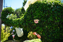 Political Topiary. (companyfromechoes) Tags: topiary politics elections marincounty californiavalues