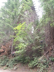 P7308067 (jbhowell) Tags: ironhorse trail bikepacking washington cascades camping snoqualamie tunnel