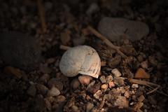 caracol (amian84) Tags: macro canon snail caracol luminosity luminosidad eos1200d