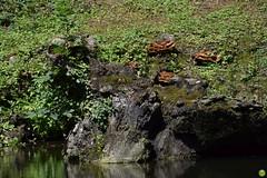 Bank full of fungi (petrOlly) Tags: summer nature mushroom water germany deutschland europa europe natura fungi funghi pilze grzyby pilz przyroda moenchengladbach rheydt toepfermarkt grzyb schlossrheydt