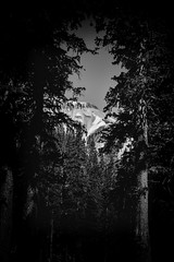 Through the Trees (Scosanf) Tags: trees summer blackandwhite bw mountains nature monochrome forest canon dark eos colorado moody outdoor vignette ef2470mmf28lusm 6d topazlabs coloradotrails