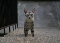 Kitty (Dragan*) Tags: cat kitten animal stairs portrait outdoor