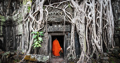 Cambodge (Voyages Lambert) Tags: adventure ancient ancientcivilization angkor angkorwat archaeology architecture asia banyantree buddhism cambodia carving doorway entrance famousplace gate growth history journey khmer large monk mural old oldruin orange people photography praying rajavihara religion robe root sculpture siemreap spirituality stone taprohmtemple temple tomb tourist traditionalculture travel tree unescoworldheritagesite wat