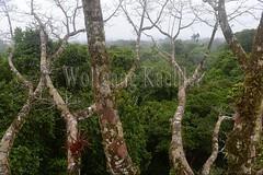 60071602 (wolfgangkaehler) Tags: 2016 southamerica southamerican ecuador ecuadorian latinamerica latinamerican rionapo rionapoecuador rionaporiver rainforest coca cocaecuador laselvalodge observationtower tower rainforestcanopy epiphyticplants epiphyte epiphytes trees