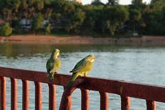 Lago, Casa Campo (Kirikob12) Tags: lago casadecampo madrid love fuji fujifilm xt10 spain bird espaa couple cotorra