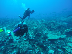 Diving around the Marshallese archipelago!