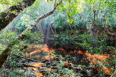 Malaysia_Taman_Negara_45 (Toma.Marinov) Tags: taman negara rain forest malaysia