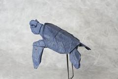 Sea Turtle - Tortuga Marina (JuAnSe! origami) Tags: turtle galapagos origami ecuador design paper juan landeta tortuga marina sea