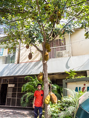 Jackfruit and random guy? (karla.hovde) Tags: dhaka bangladesh asia travel urban city jackfruit fruit tree plant