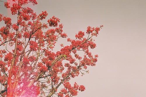 Spring - Auckland NZ