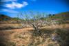 Parque Natural Calblanque, Murcia (Señor L - senorl.blogspot.com.es) Tags: españa beach canon photography spain playa murcia beaches fotografia playas cabodepalos semanasanta 2015 calblanque peñadelaguila montedelascenizas luisalopez parquenaturalcalblanque llopezkm0 luisalopezphotography senorl senorlblogspotcom luiskm0 luisalopezfotografia