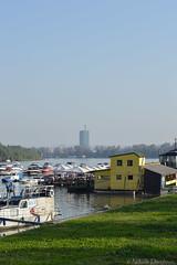 (Nikola Danilovic) Tags: city water river nikon cityscape photographer ships serbia belgrade danube nofilter srbija nikond3200 d3200 beoagrad