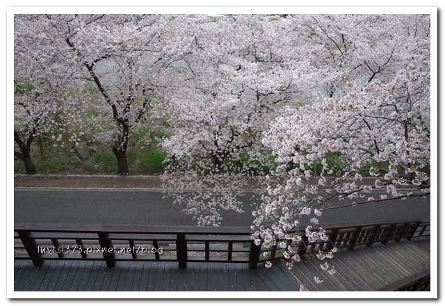 화개십리벚꽃길30
