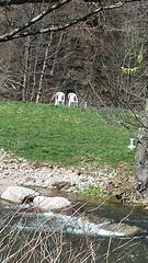 Frühling ist da  es wird grün im schönen Wiesental (saahiradancer) Tags: priska schwarzwald ferien chillen frühling laufen sonnenschein schopfheim 2015 nieke bauchtänzerin saahira