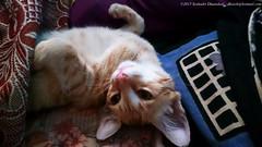 Cat - playful
