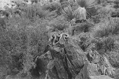000002010019 (kneuhof) Tags: california road trip camping summer blackandwhite white black nature 35mm los angeles joshua hiking katie joshuatree roadtrip neuhof katieneuhof