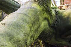 Fosilized Pteradactyl. (df-stop.) Tags: old abstract tree green nature monster canon manchester moss lichen limbs alexandrapark felled whalleyrange dfstop