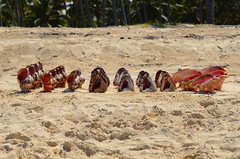 _DSC0250 (jtleagles) Tags: shells beach sunrise nikon dominicanrepublic carribean tropical caribbean atlanticocean conch d7000 nikond7000 shellsale
