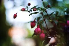 - (-LilyBeth) Tags: flowers light flower nature colors outside nikon flickr dof bokeh natura depthoffield wonderfulworld d3000
