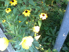 Fotografie9262 (chicore2011) Tags: minigarden flowers