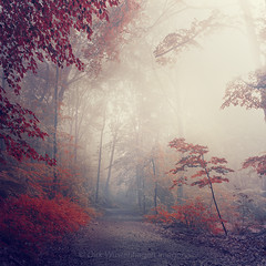 all is light red (Dyrk.Wyst) Tags: atmosphre bergischesland buchenwald bume deutschland gegenlicht germany landschaft laub licht natur nebel sommer sonnenaufgang stimmung wald wuppertal atmosphere backlight beechtrees fog forest haze hike landscape leaves light mist mood morgens morning mystical nature outdoor summer sunrise trees