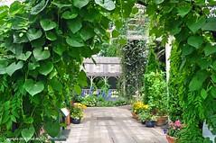 Inspiration (Trish Mayo) Tags: gardens nybg newyorkbotanicalgarden americanimpressionism thebestofday gnneniyisi gardensoncanvas