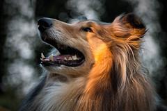 20150819_201807-EDT.jpg (Pabras Pets) Tags: roosendaal noordbrabant nederland nl