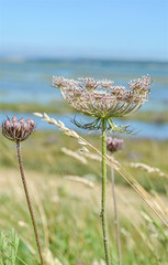 Seaweed (daisyglade) Tags: beach sea keyhaven hampshire summer sunshine blueskies wildflowers coastalwalk passionforwildflowers janeausten