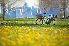 A place in the shade (Philocycler) Tags: bike city flowers bokeh spring cityscape shade dutchbike jclindbikeco workcycles workcyclesfr8 chicagoist chicago chicagolakefront canon5dmarkiii canonef200f28l canon
