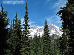 Mt. Rainier National Park (Shutterbug Fotos) Tags: mtrainier rainier nationalpark mountain hike trail nature outdoors park trees forest