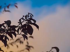 Sunset 20140924 (caligula1995) Tags: 2014 clouds plumtree sunset