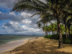 St Croix 2014-02-174 (Kaua'i Dreams) Tags: stcroix caribbean usvirginislands virginislands buckisland palmtree palm palms palmtrees sea ocean clouds shadows dappledlight island water waves sun sky