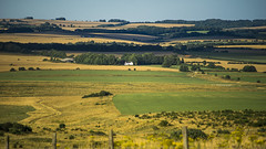 the view from Sidbury Hill (Redheadwondering) Tags: sonya7rii wiltshire summer sigma sigma50mmdgmacro salisburyplain sidburyhill landscape fence sunlight shadows a7ii α7ii