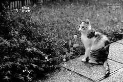 Ljuba (Elisa Medeot) Tags: cats gatti animals cute love animali carini bellezza canon natura nature beauty