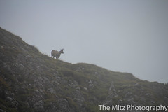 IMG_3478 (The Mitz Photography) Tags: gams grünersee hochschwab mariazell maryclan murmerl mädels nebel pilgern sommer steinbock wandern