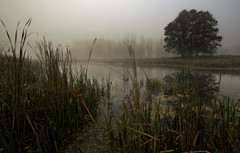water scenery (MarcelXYZ) Tags: cesarz drohiczyn marcelxyz morning mist fog water lake nature tree canon