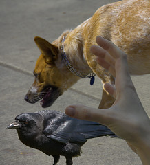 Everyone Wants In (swong95765) Tags: dog bird hand attention action focused want cautious approach animal