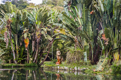 DSC_5401 (sergeysemendyaev) Tags: 2016 rio riodejaneiro brazil jardimbotanico botanicgarden     outdoor nature plants    green  beauty  water