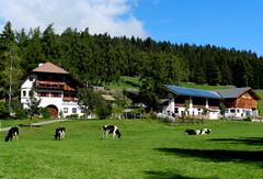 Urlaub am Bauernhof am Lärchhof