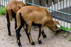 DSC_4697.jpg (mrburner73) Tags: zoo nuremberg tiergarten nuernberg tamron150600 tamronsp150600mmf563divcusd nikond750