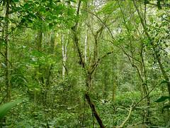 Mabira Undergrowth (berniedup) Tags: uganda mabiraforest